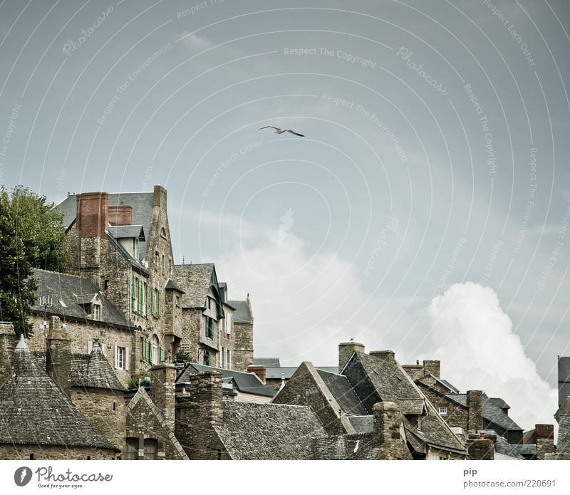 vogelperspektive Himmel Wolken Baum Stadt Altstadt Haus Fassade Fenster Dach Schornstein Sehenswürdigkeit Insel Mont-Saint-Michel Vogel Möwe 1 Tier alt hoch