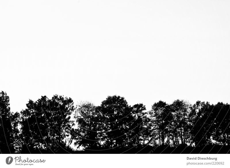 Waldgrenze Natur Pflanze Wolkenloser Himmel Baum schwarz weiß Freisteller Schwarzweißfoto Außenaufnahme Textfreiraum oben Textfreiraum Mitte Hintergrund neutral