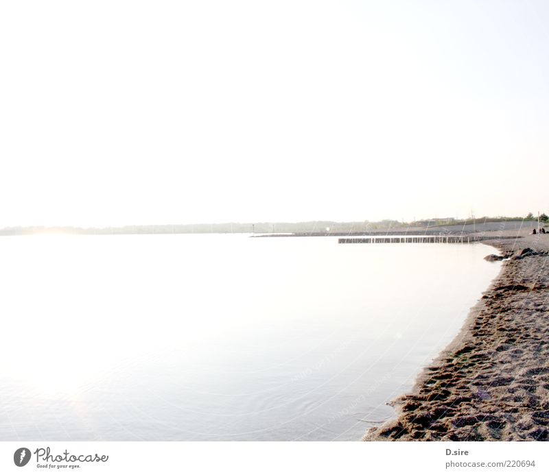 Am See Ferne Sommer Umwelt Natur Landschaft Erde Sand Luft Wasser Wolkenloser Himmel Schönes Wetter Küste Strand Cospudener See nass Sauberkeit blau braun gelb