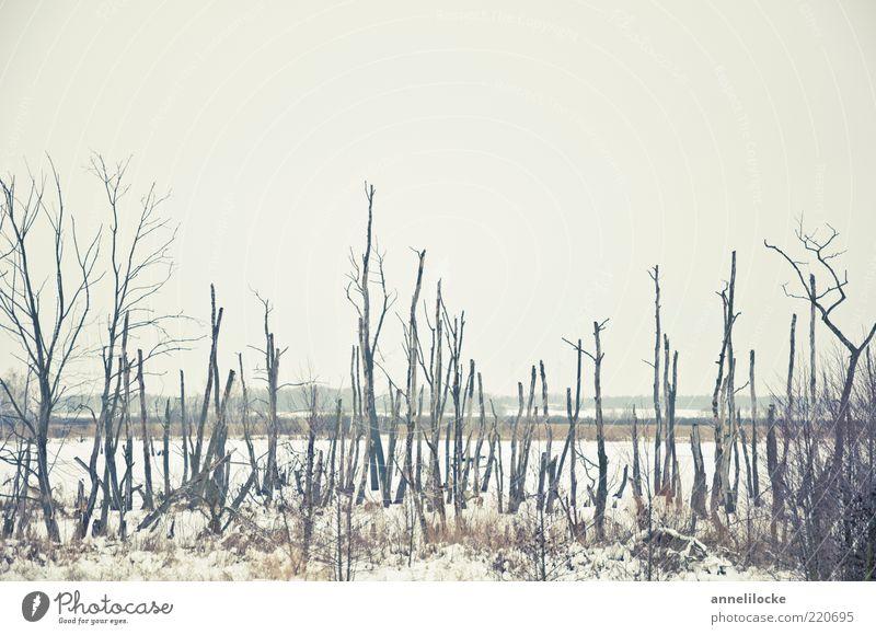 kalter Tod Ferne Winter Umwelt Natur Landschaft Pflanze Klima Wetter Eis Frost Schnee Baum Baumstamm Flussufer hell kaputt Traurigkeit ruhig karg Moor trist