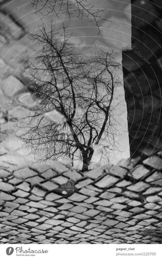 Neuköllner Bürgersteig Baum Straße Wege & Pfade Wasser dreckig trashig grau schwarz weiß Pfütze Regen Reflexion & Spiegelung Schwarzweißfoto Außenaufnahme