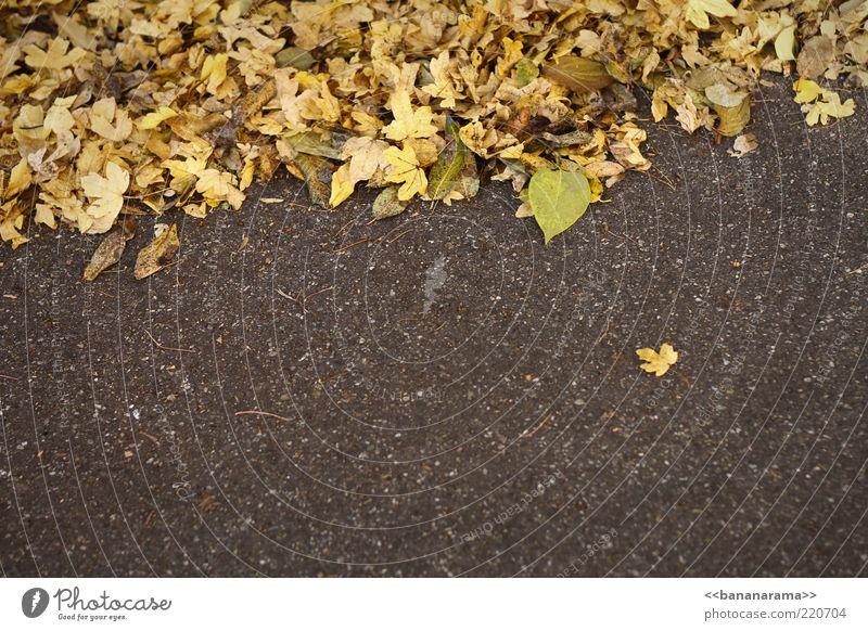 Einzelgänger Natur Herbst Wetter Blatt Boden Asphalt Ausreisser herbstlich Herbstfärbung gelb separieren Farbfoto mehrfarbig Außenaufnahme Textfreiraum unten