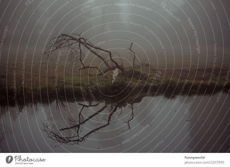 Wie ein Hirschgeweih zu Boden Umwelt Herbst Nebel Baum Seeufer Flussufer ästhetisch gruselig trist Ast Reflexion & Spiegelung kahl Wasser dunkel Dämmerung