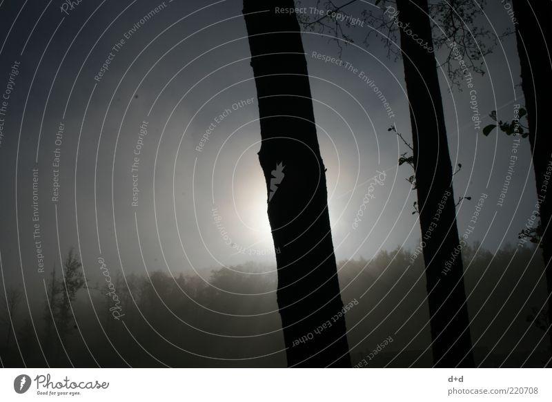 l l l Luft Wald Baum Sonnenaufgang Nebel Nebelwald Silhouette Baumstamm blau-grau silber Waldlichtung Waldrand Nebelfeld Herbst trist Textfreiraum links
