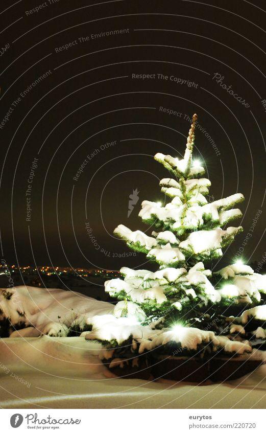 Adventszeit Weihnachten & Advent weiß Baum Winter schwarz kalt Schnee Stimmung Stern Frieden Weihnachtsbaum Tanne Nachthimmel Dezember Lichterkette
