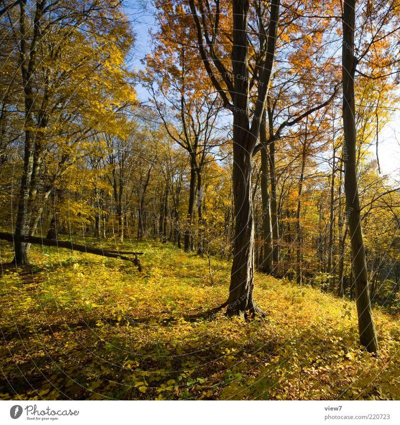Hunderunde Natur Himmel Baum Sonne Pflanze Wald Leben Erholung Herbst Gefühle Landschaft Stimmung Umwelt ästhetisch authentisch Wandel & Veränderung