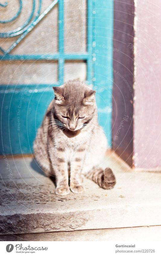 Sonne tanken schön ruhig Tier Katze Tür sitzen Tiergesicht Fell einzeln Gelassenheit Müdigkeit Pfote Schwanz Hauskatze Schatten Türschwelle
