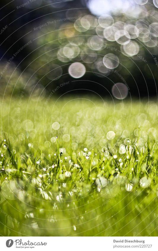 Tears from heaven Natur Wasser grün Pflanze Sommer Wiese Herbst Gras Frühling Park Regen Landschaft Luft Hintergrundbild Wetter nass