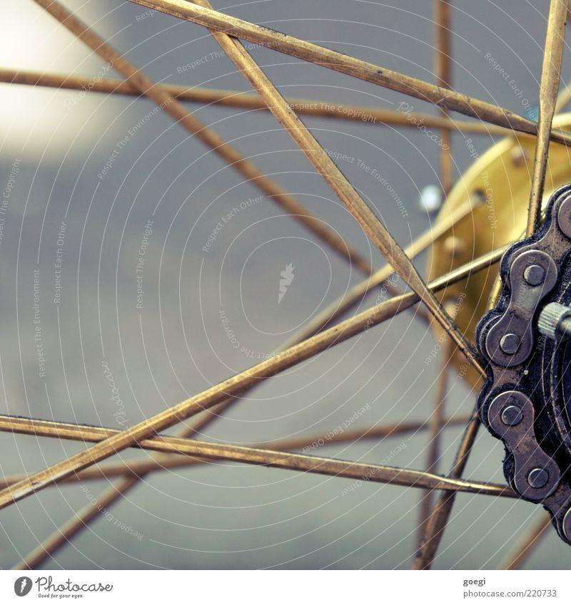 Eingangrad II grau Fahrrad Metall gold einfach Mobilität silber bewegungslos Zahnrad Anschnitt Bildausschnitt Verkehrsmittel Speichen Detailaufnahme Nabe Fahrradkette