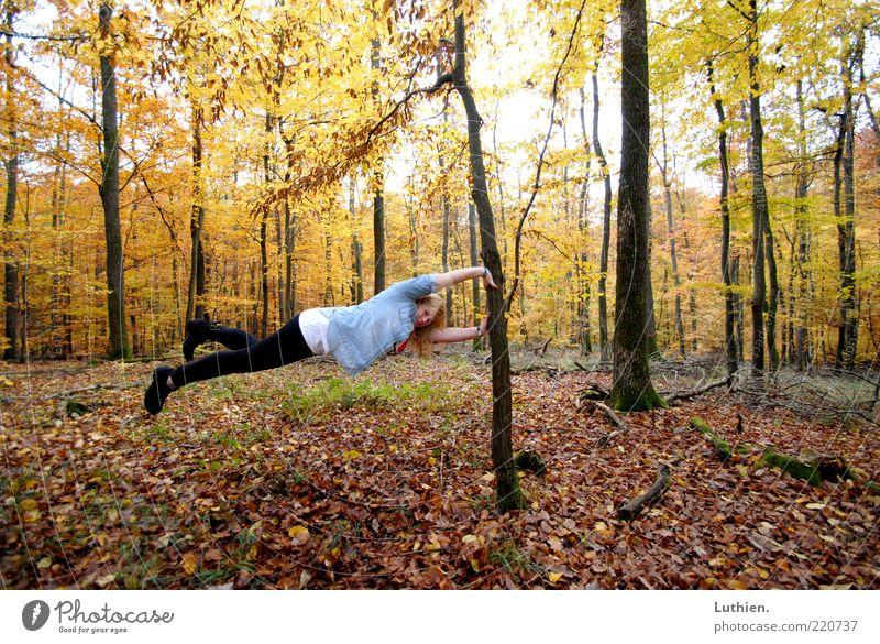 obacht Frau Mensch Natur Jugendliche Baum blau Pflanze Wald Herbst Erwachsene außergewöhnlich Baumstamm Schweben horizontal Herbstlaub