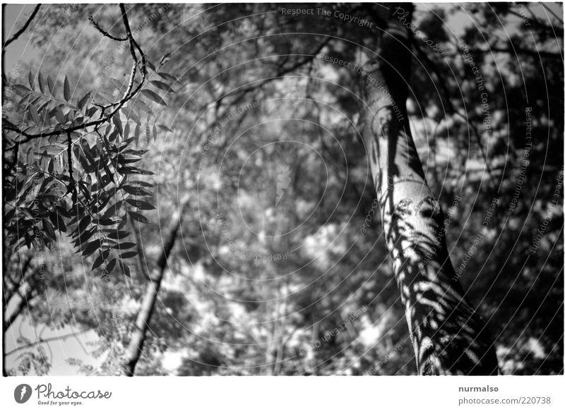 Grautonjungle Natur Baum Pflanze Sommer Blatt grau Umwelt natürlich Urwald Baumstamm Blätterdach Blattschatten