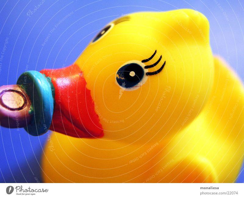 babyente1 Badeente Schnuller gelb Spielzeug Wimpern Schnabel Tier Makroaufnahme Nahaufnahme Ente Statue Auge Im Wasser treiben Schwimmen & Baden