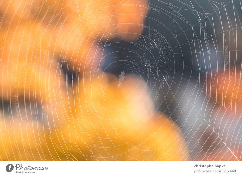 the net Natur Herbst natürlich klein Schönes Wetter nah Netz Spinnennetz
