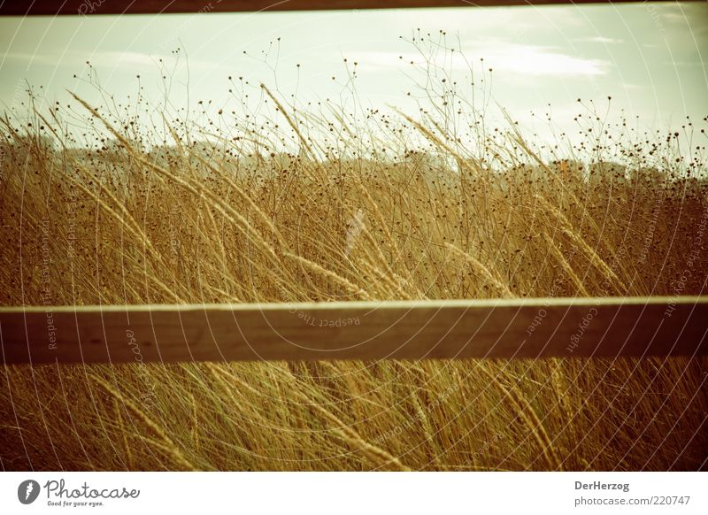 Balkengras Natur Himmel Sonne Sommer Strand ruhig Gefühle Gras träumen Wärme Landschaft Küste Umwelt gold Schönes Wetter Portugal