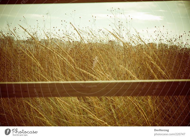 Balkengras Umwelt Natur Landschaft Sonne Sommer Schönes Wetter Wärme Gras Küste Strand Gefühle ruhig träumen Farbfoto Außenaufnahme Tag Portugal dehydrieren