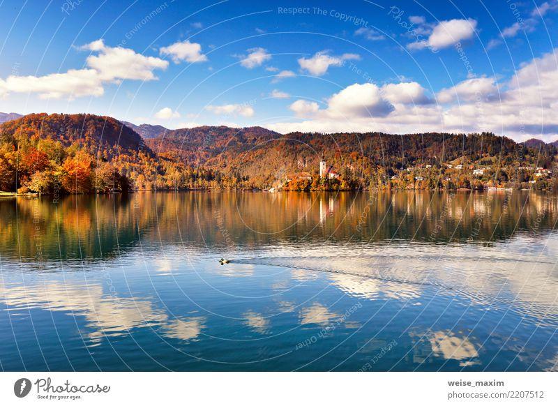 Erstaunlicher Herbst Blick auf Bled Lake. Slowenien Gebirge Himmel Natur Ferien & Urlaub & Reisen blau Sommer Stadt schön grün Landschaft Baum Wald