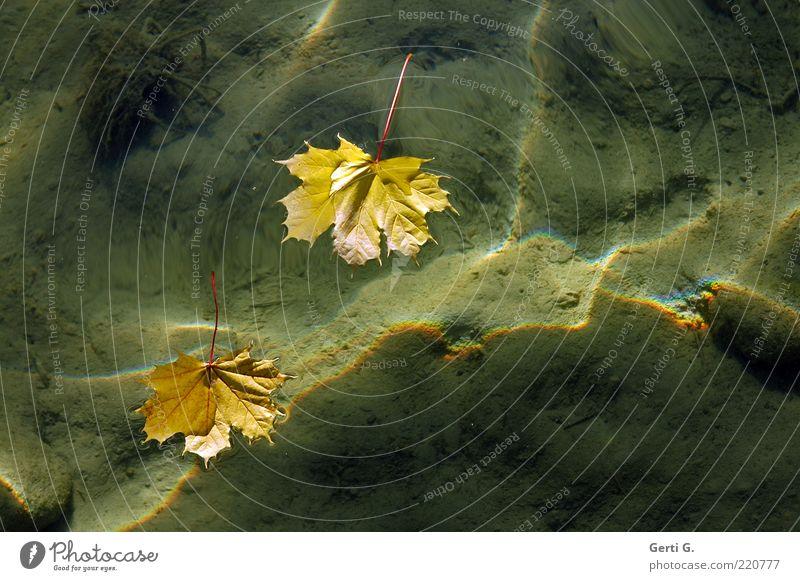 oberflächlich Natur Wasser Herbst Blatt See Sand Zeichen Stimmung Im Wasser treiben Lichtbrechung gelb herbstlich Boden deutlich Herbstlaub Wasseroberfläche