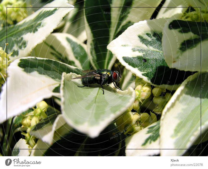Fliege Natur Pflanze Verkehr
