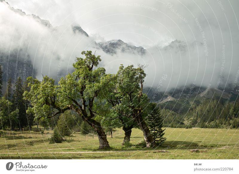Traumzauberbaum Urelemente Wolken Sonnenlicht Sommer Herbst Baum Alm Ahorn Wiese Alpen Berge u. Gebirge Gipfel groß grau grün Romantik ruhig Märchenlandschaft