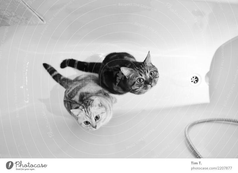 Badetag Katzen Tier Zufriedenheit Badewanne Sicherheit Haustier Hauskatze