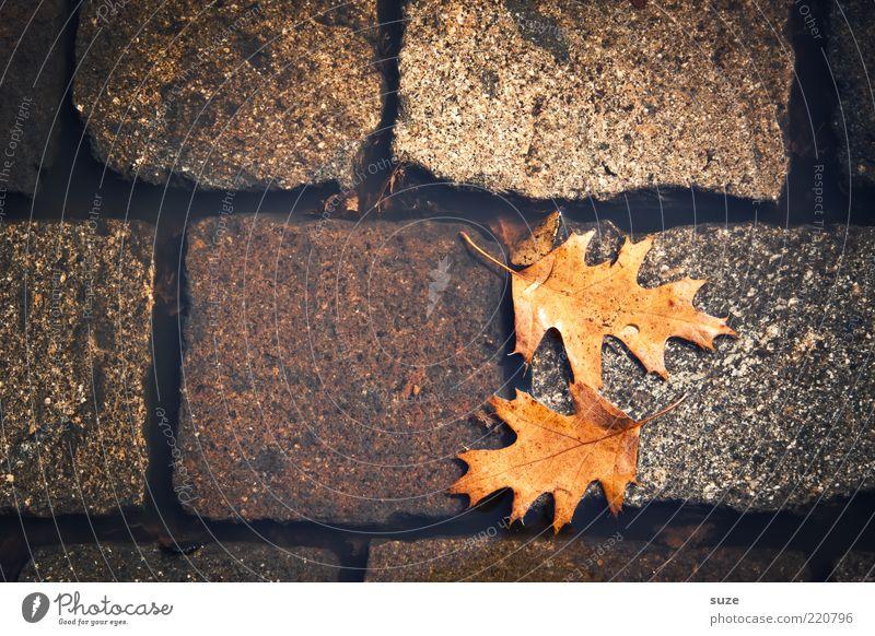 Fall Wasser Herbst Blatt Straße authentisch dreckig nass natürlich schön braun Herbstlaub Pfütze Wasseroberfläche Eichenblatt Herbstbeginn Kopfsteinpflaster