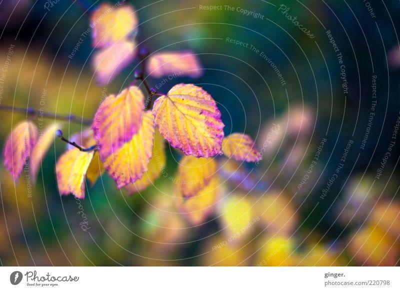 Herbstrausch | The Trees Natur alt Pflanze Farbe Blatt Umwelt dunkel Herbst hell Wetter Klima authentisch ästhetisch Schönes Wetter Jahreszeiten Zweig