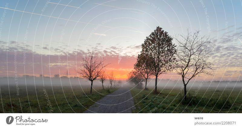 Sonnenaufgang über einem Feldweg ruhig Landwirtschaft Forstwirtschaft Natur Landschaft Pflanze Baum Wiese Platz Straße Wege & Pfade friedlich Umweltschutz