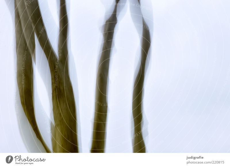 Buchen Himmel Natur Baum Pflanze Umwelt kalt Leben Bewegung wild Wachstum ästhetisch Wandel & Veränderung Baumstamm Alkoholisiert kahl