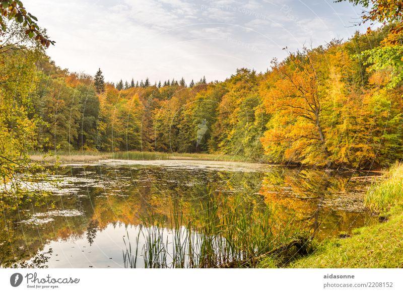 Forellenteich Landschaft Wasser Wolken Herbst Schönes Wetter Wald Teich achtsam ruhig Frieden Zeit Zufriedenheit Farbfoto mehrfarbig Außenaufnahme Menschenleer