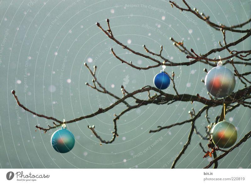 White Christmas I Weihnachten & Advent Baum blau Winter dunkel Schneefall Stimmung glänzend Wetter Weihnachtsbaum Kitsch Dekoration & Verzierung Kugel silber Christbaumkugel