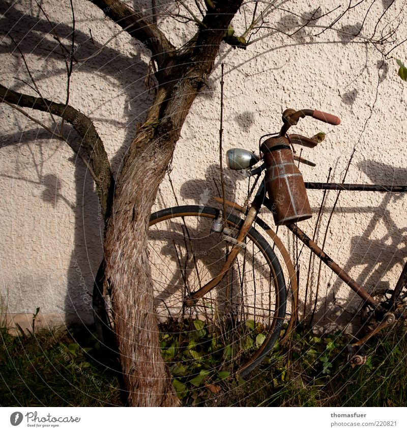 Bike Herbst Fahrrad Schönes Wetter Baum Mauer Wand Milchkanne Metall alt braun Stimmung Verfall Vergänglichkeit Farbfoto Gedeckte Farben Außenaufnahme Abend