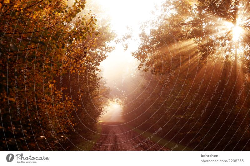 am ende ist licht Natur Pflanze schön Sonne Baum Blatt Wald Herbst Wege & Pfade träumen Feld Kraft Sträucher genießen Schönes Wetter Hoffnung