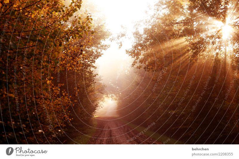 am ende ist licht Natur Pflanze Sonne Herbst Schönes Wetter Baum Sträucher Blatt Feld Wald genießen träumen schön Kraft Mut Hoffnung Glaube Trauer Sehnsucht