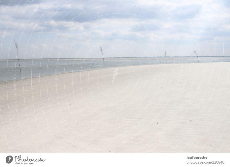 Malerische Strandlandschaft Wangerooge Natur Landschaft Urelemente Sand Luft Wasser Himmel Wolken Gewitterwolken Horizont Sonnenlicht Klima Wetter Wind Baum
