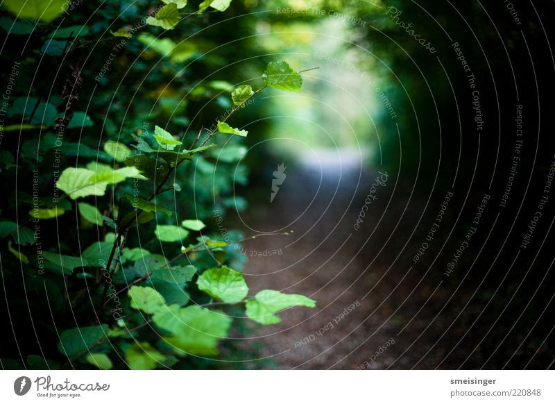 herbst Natur grün Pflanze Blatt ruhig Umwelt Wege & Pfade Park braun nass natürlich Ast Fußweg Hecke Grünpflanze Freisteller