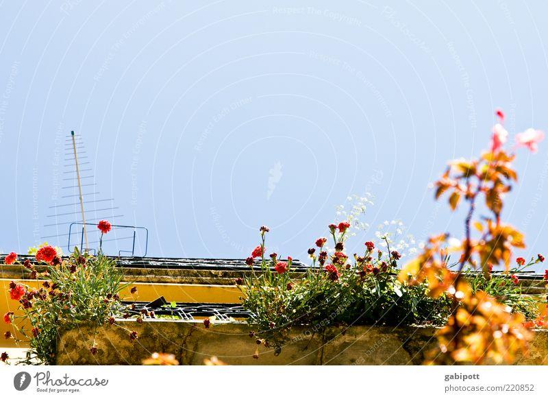 sommer vorm balkon Natur blau Pflanze Sonne Sommer Blume Blatt Haus Farbe Blüte Wärme Fassade Fröhlichkeit Wachstum Wandel & Veränderung Dekoration & Verzierung