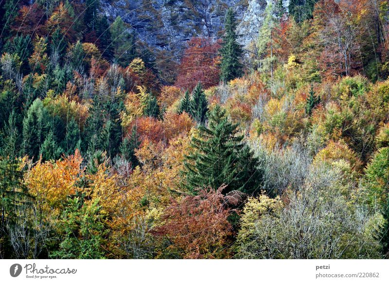 Herbstwald Natur grün schön Baum ruhig Wald gelb Farbe Erholung Landschaft Umwelt Stimmung braun ästhetisch Wachstum