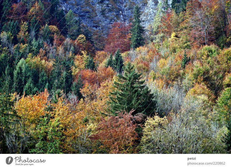 Herbstwald Umwelt Natur Landschaft Baum Sträucher Nutzpflanze Wald ästhetisch authentisch schön braun mehrfarbig gelb grün ruhig Erholung Farbe Frieden Stimmung