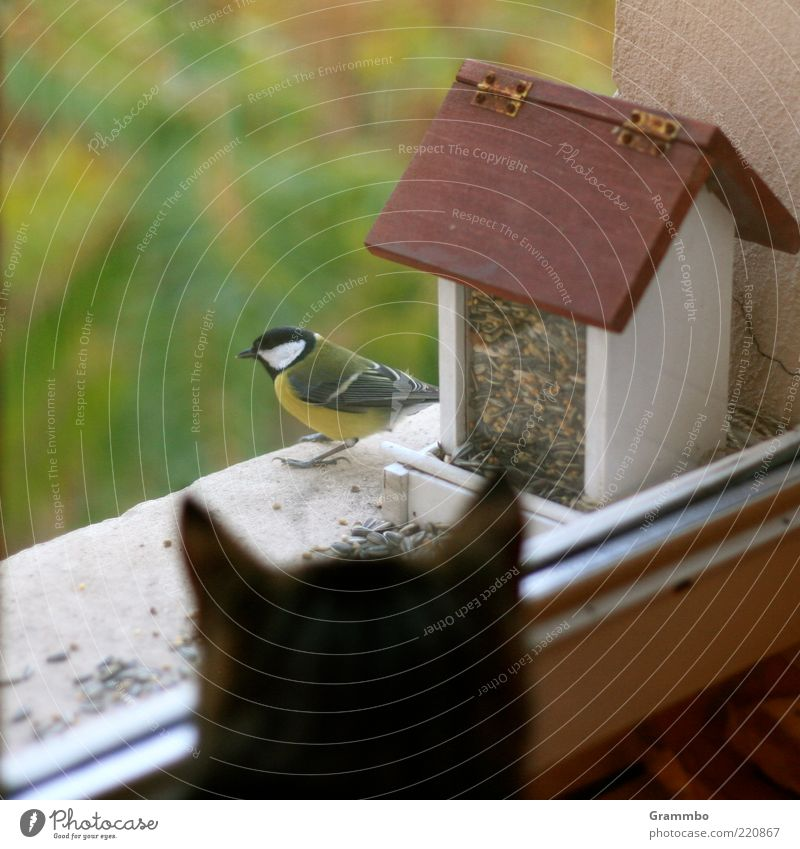 Und grüß Minka von mir! Tier Fenster Traurigkeit Katze Vogel sitzen Sicherheit bedrohlich beobachten Wildtier Fensterscheibe Haustier Futter Landraubtier Meisen Futterhäuschen
