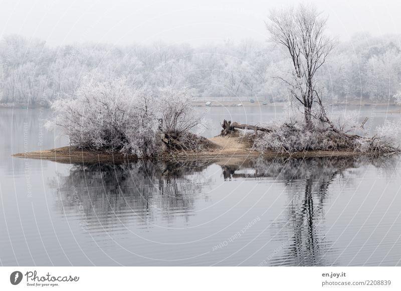Inselglück Umwelt Natur Landschaft Pflanze Winter Klima Klimawandel Schnee Baum Sträucher Seeufer kalt weiß ruhig Einsamkeit stagnierend Surrealismus Symmetrie