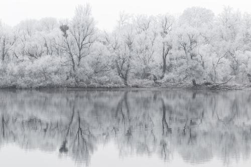 bald Natur weiß Landschaft Einsamkeit ruhig Winter Wald schwarz Umwelt kalt Traurigkeit Schnee See Klima Seeufer Trauer