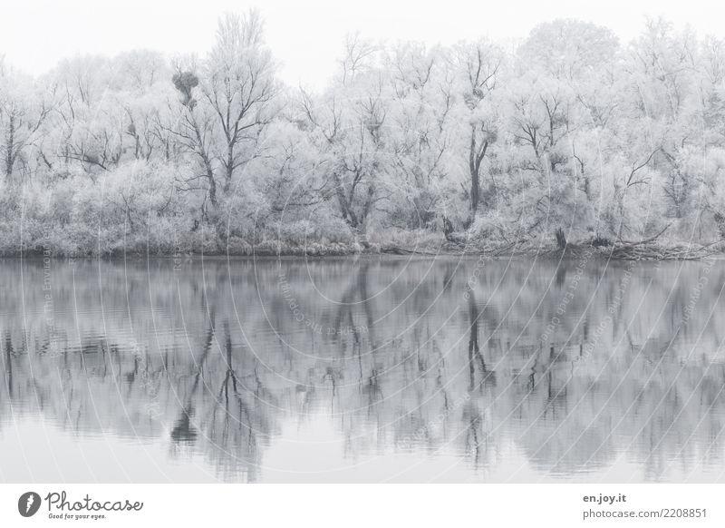 bald Winter Natur Landschaft Schnee Wald Seeufer kalt schwarz weiß ruhig Traurigkeit bizarr Einsamkeit Klima Surrealismus Symmetrie Trauer Umwelt Irritation
