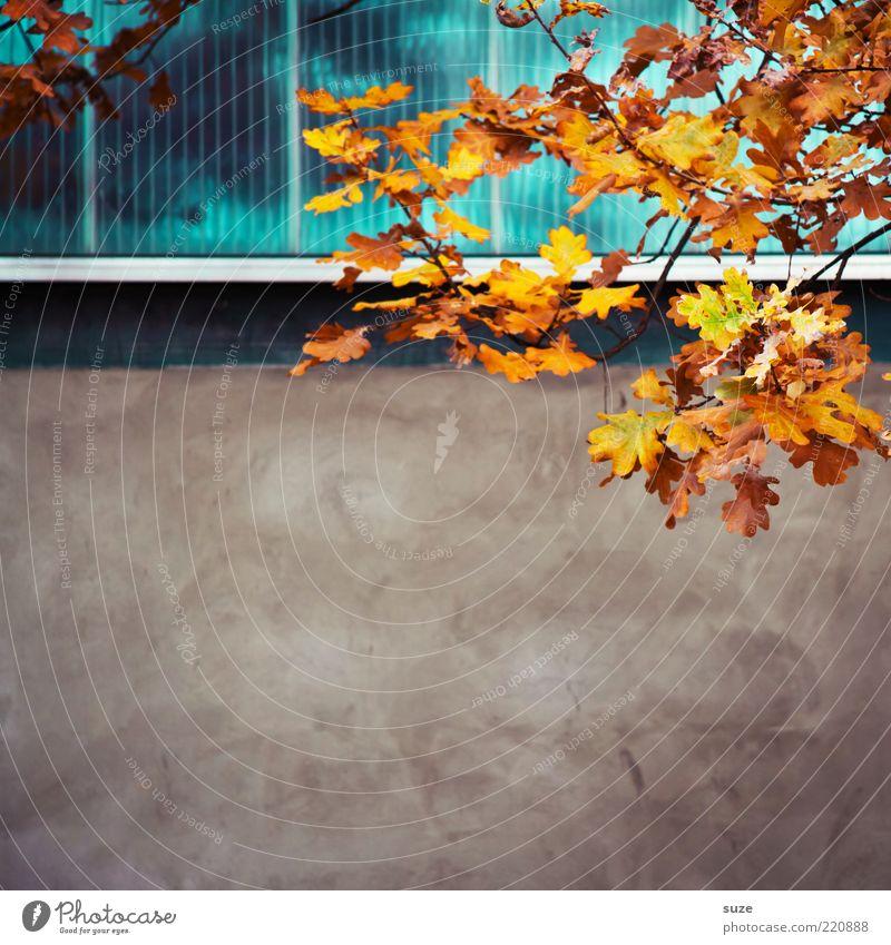 Hang zum Freiraum schön Natur Pflanze Himmel Herbst Blatt Mauer Wand Fassade Fenster ästhetisch Herbstlaub herbstlich Jahreszeiten Herbstbeginn Oktober Ast
