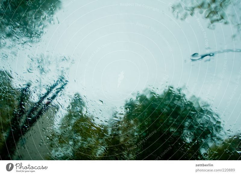 Rainy Day Baum Regen Wetter Umwelt nass Klima Unwetter Scheibe Oktober schemenhaft Textfreiraum schlechtes Wetter Monat Natur Windschutzscheibe