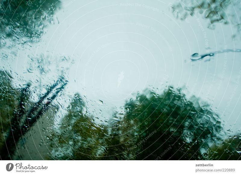 Rainy Day Umwelt Klima Wetter schlechtes Wetter Unwetter Regen Baum Blick Oktober wallroth Windschutzscheibe nass Farbfoto Außenaufnahme Scheibe Textfreiraum
