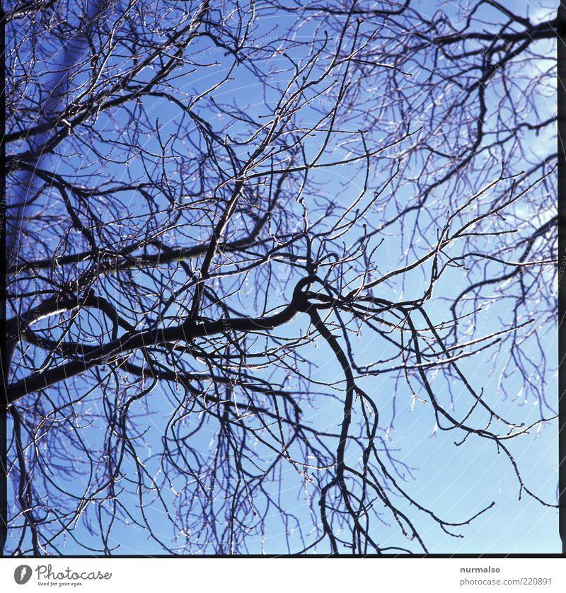eiskalt. Umwelt Natur Landschaft Pflanze Tier Eis Frost Baum frieren leuchten frisch natürlich Stimmung Winter Morgen Silhouette Reflexion & Spiegelung