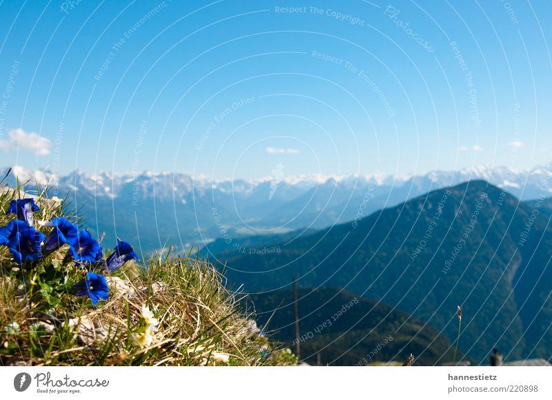 Bergidyll Natur Blume blau Pflanze Sommer Ferne Gras Berge u. Gebirge Frühling Freiheit Landschaft Aussicht Alpen Gipfel Bayern Schönes Wetter