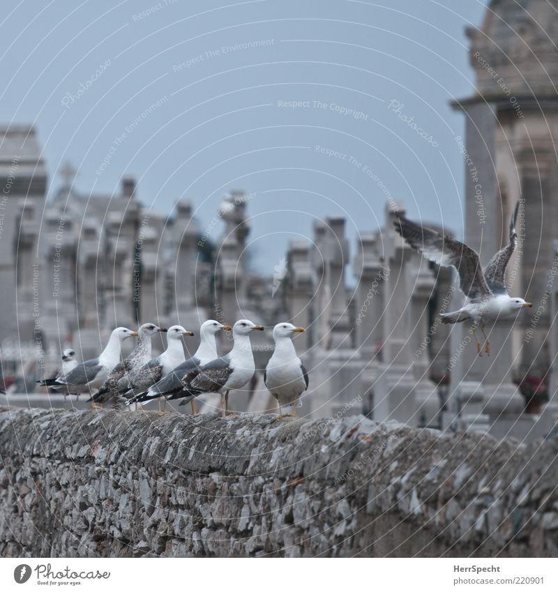 Aasgeier? alt weiß grau Stein Mauer Zusammensein Vogel warten Fliege fliegen sitzen Tiergruppe Christliches Kreuz Möwe Friedhof Tier