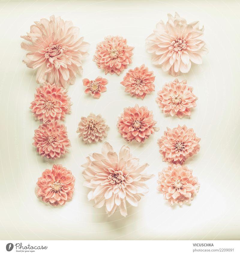 Blassrosa Blumen Stillleben Natur Pflanze Sommer Blüte Liebe Feste & Feiern Design Dekoration & Verzierung Geburtstag Zeichen weich Hochzeit Blumenstrauß