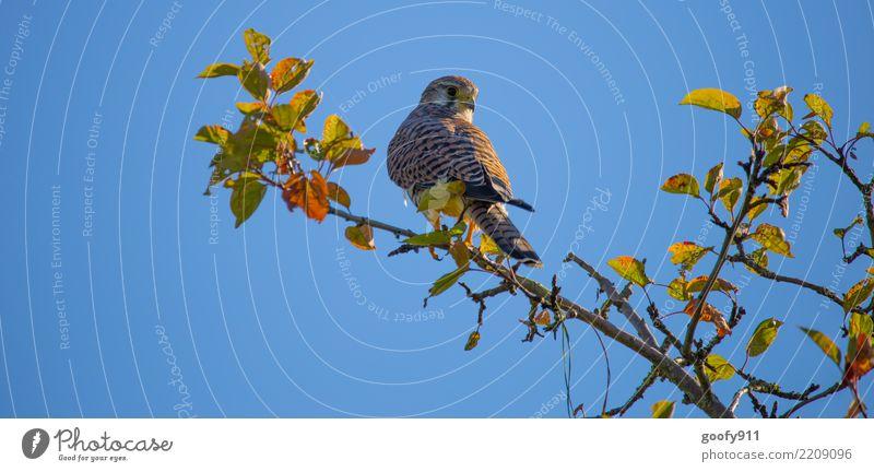Alles im Blick elegant Ausflug Natur Himmel Wolkenloser Himmel Sonne Sonnenlicht Herbst Schönes Wetter Baum Blatt Park Wald Tier Wildtier Vogel Tiergesicht